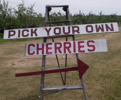 Pick Your Own Cherries Door County | upickfarmlocator.com