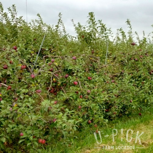 Where to find U-Pick Apple Orchards