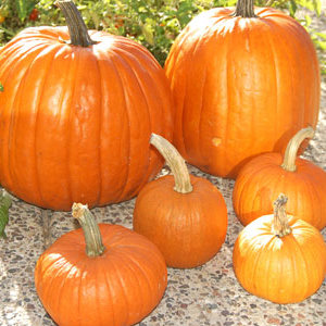 Cooking Pumpkin vs Carving Pumpkin | upickfarmlocator.com