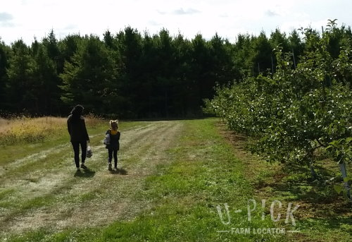 Fall Apple Picking U-Pick Apple Orchard | upickfarmlocator.com